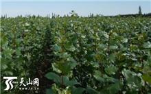 """重庆:武隆岭镇森林成为农民增收的""""摇钱树"""""""