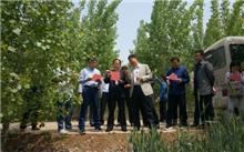 山东:高密市三项措施,把握新的林业管理的主要发展