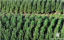 新疆:财政林业投亿元专项资金,促进果业农民,以提高效率