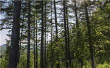 哈尔滨:今年造林敲定杨六运杉木落叶松