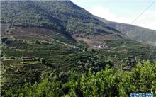 云南林业经济带动山区人民脱贫致富
