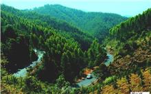 福建:尤溪建成首批国家重点林木良种基地