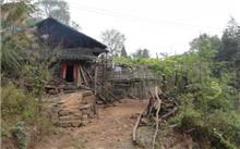 湖南:沅陵两个基地基地挑选的稀有物种