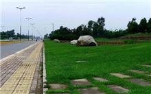 江苏:赣榆使用直升机县的绿化带,以防止和对待美国白