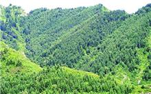 山东枣庄市薛城造林完成5000亩