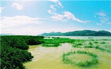 福建:调试漳江口湿地公园