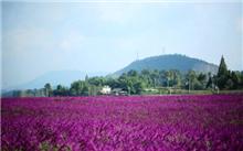 江西省全南县开发芳香的鲜花和植物