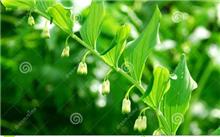 百合谷的耕作方法和栽培管理