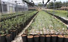 安徽:黄山市加快林业产业转型升级