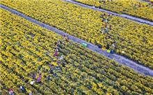 江苏:淮安区234公路绿化补植项目实施