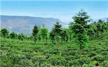"""湖南省郴州市林业""""八大工程"""",再涂上生态之美"""