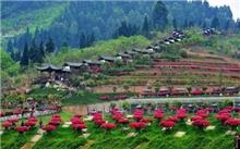 在花卉产业在福建省未来发展计划