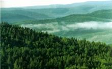 浙江:改善森林补偿标准补偿25元每亩