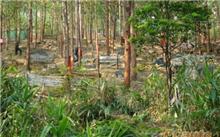 江苏:扬州打野战大规模的植树造林