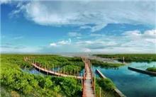 广西:推进生态农业体系,加强红树林的保护