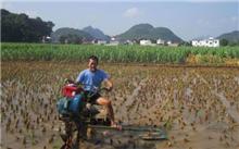 江苏:大丰花卉生产技术指导的统一管理,以提高效率