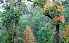 湖南:青石冈国有林场森林抚育,通过中央财政补贴试点项目