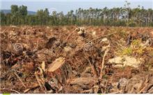 吉林:明年接近砍伐森林的房地产苗可自给自足