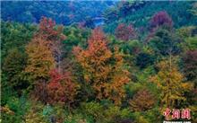 江西:新余市林业局加大森林资源的保护和恢复