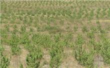 江西:永修县林业产业取得阶段性成果