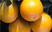 柚子,脚跟夏橙苗,种植技巧