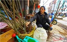 江西:兴国县林业局做花卉苗木防冻工作