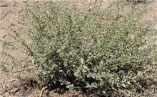 甘肃:荒漠种子植物建资源信息共享平台