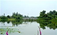 山东:麻大湖湿地升级国家湿地公园