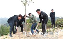 江西:安远县加强新植树的管理和保护