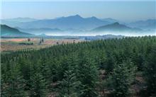 新泰市,山东省泰安市造林280多万亩