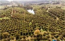 重庆:市开始打造全国人口最多的县北温带种源苗木基地初显成效
