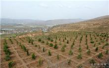 山东:庆云启动全省首个全民义务植树碳汇造林基地项目