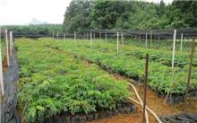 甘肃:辉县市苗木繁育朝多元化发展