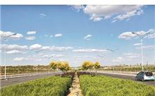 """山东:要打造城市""""绿肺""""社会捐赠268万元购买苗木"""