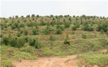 齐齐哈尔市,黑龙江省率先完成造林任务