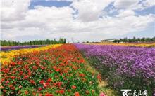 宁夏:堡花卉苗木基地温新庄好起点高效率