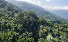 江西:万载县加强生态公益林管理保护