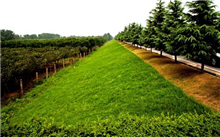 郑州:采取措施出台标准化生态廊道管理