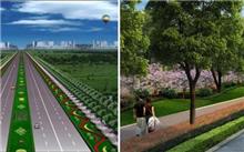 山西:大同市城市道路绿化迫切需要加强保护工作
