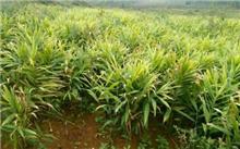 贵州省安龙县,2014年计划种植千万公顷造林5.89