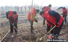 青年志愿者云南富源组织开展义务植树活动