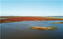 吉林:禁止填埋场建设湿地