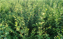北京:新的10亩苗圃规模有序进行