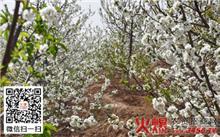 樱桃树管理技术的夏天