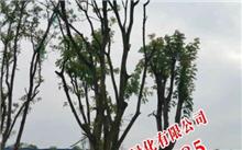 近500万元云南旅游投资拟购80%股权江南园林