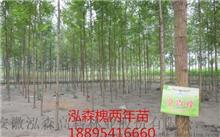 河南新乡市雨季种植8500英亩完整