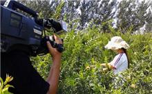 施肥和除草牡丹石榴病虫害防治