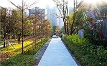 """深圳:龙华区打造""""国王相当的""""景观大道"""