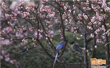 安徽:合肥新的花鸟市场将在中旬开
