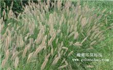 苏州:湿地恢复应该更芦苇等原生植物